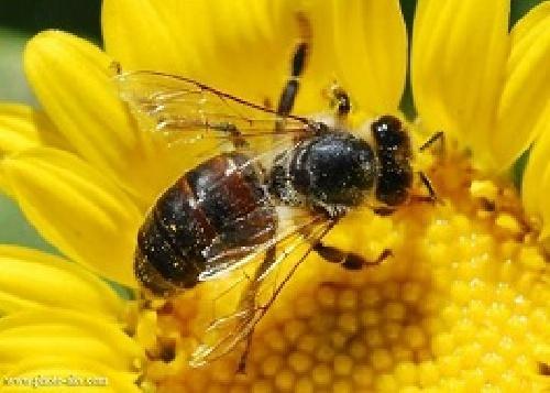کارآفرینی پرورش و نگهداری زنبور عسل 66 ص با پاورپوینت