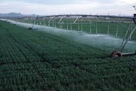 اثر مقادیر مختلف آبیاری تکمیلی و نیتروژن برعملکرد دانه و اجزای آن درگندم