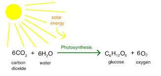 نقش دی اکسید کربن در فتوسنتز گیاهان خشکی و آبزی