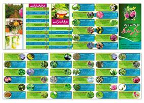 طرح لایه باز بروشور عرقیات گیاهی 48 در 16 تماما لایه باز