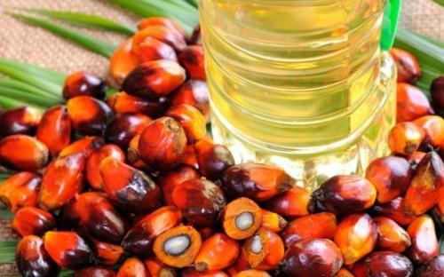 طرح توجیهی تولید الکل از خرما 300 تن الکل 60 تن اسید سیتریک  600تن شیره خرما