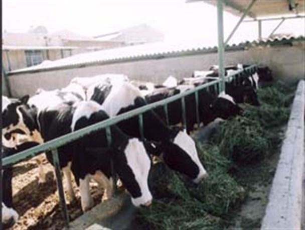 پروار بندی گوساله (ویرایش 96)