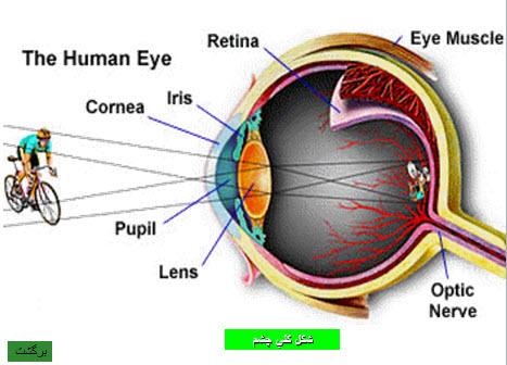دانلود پاورپوینت ساختمان چشم انسان (آناتومی)