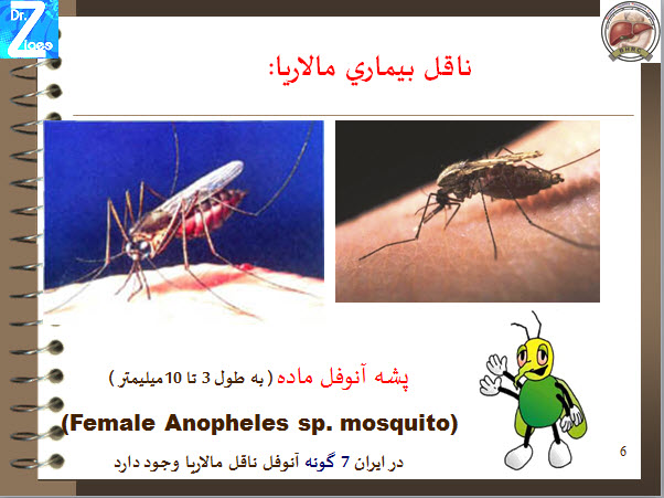 دانلود پاورپوینت همه چیز درباره مالاریا