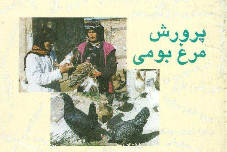 شرایط پرورش مرغ بومی(روستایی) به صورت پاورپوینت