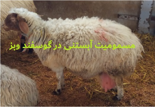 دانلود مقاله مسمومیت آبستنی در گوسفند و بز (pdf)
