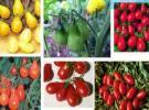 دانلود فایل ژورنال گیاه شناسی