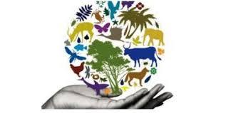 دانلود کتاب تنوع زیستی