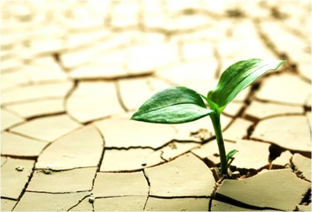 راهکارهای مقاومت و سازگاری به تنش خشکی در گیاهان