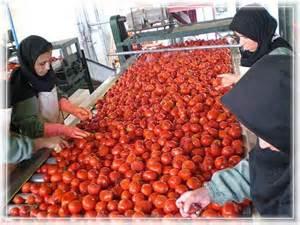 ظرح توجیهی تولید رب گوجه فرنگی
