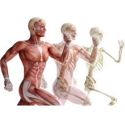 آناتومی - ویژه تئوری یازده گانه