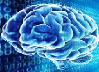 نرم افزار تشخیص دختر یا پسر بودن مغز شما