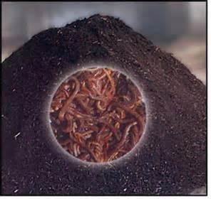طرح بازیافت زباله و تولید کود کمپوست (Compost)