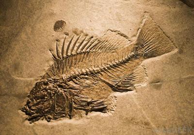 طرح درس فسیل ها آشنایی با تاریخ زمین