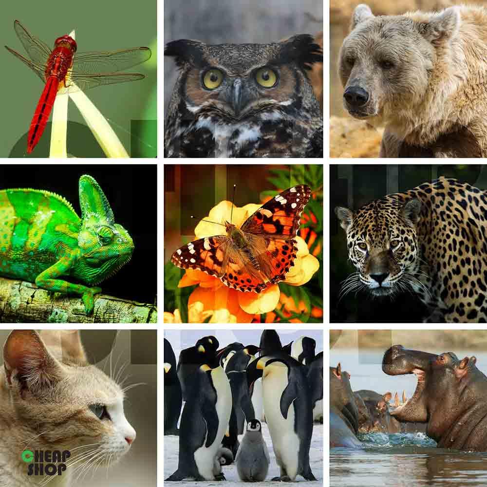 مجموعه  ی جدید، فوق العاده متنوع و جذاب تصاویر حیات وحش و طبیعت