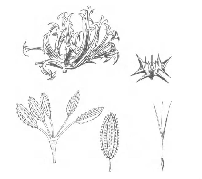 بیولوژی پراکنش بذر در گیاهان کویری