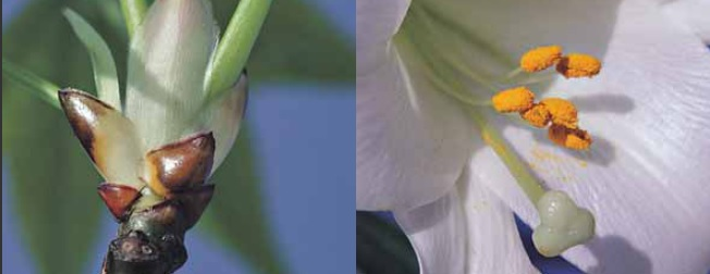 گیاه شناسی برای کشاورزان