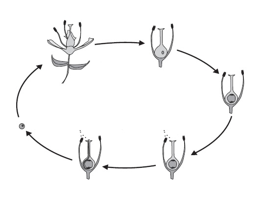 اکولوژی تکاملی روابط گیاهان نسبت به همدیگر
