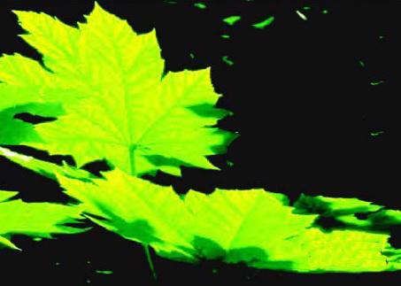 منشا و تنوع گیاهان سبز