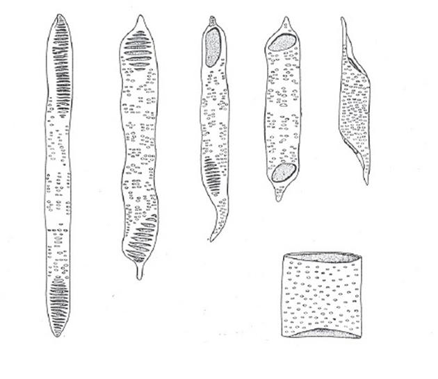 آتانومی گیاهی فان (Plant Anatomy A.Fahn)