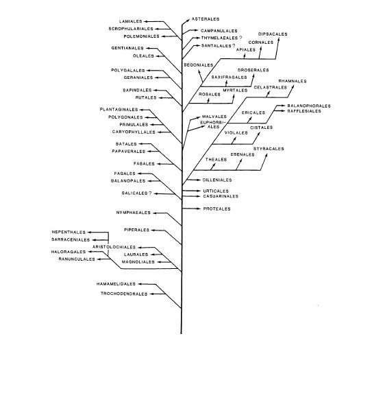 رده بندی و تکامل خانواده های گیاهان دولپه ای