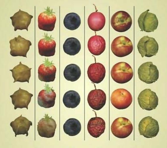 اطلس رنگی کیفیت میوه ها و سبزیجات
