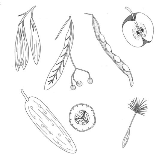 مقدمه ای بر علم گیاه شناسی