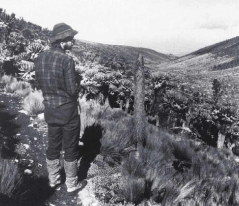 گیاهان و عملکرد آن ها در ارتفاعات نواحی گرمسیری