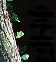 اکولوژی و تکامل رابطه مورچه ها و گیاهان