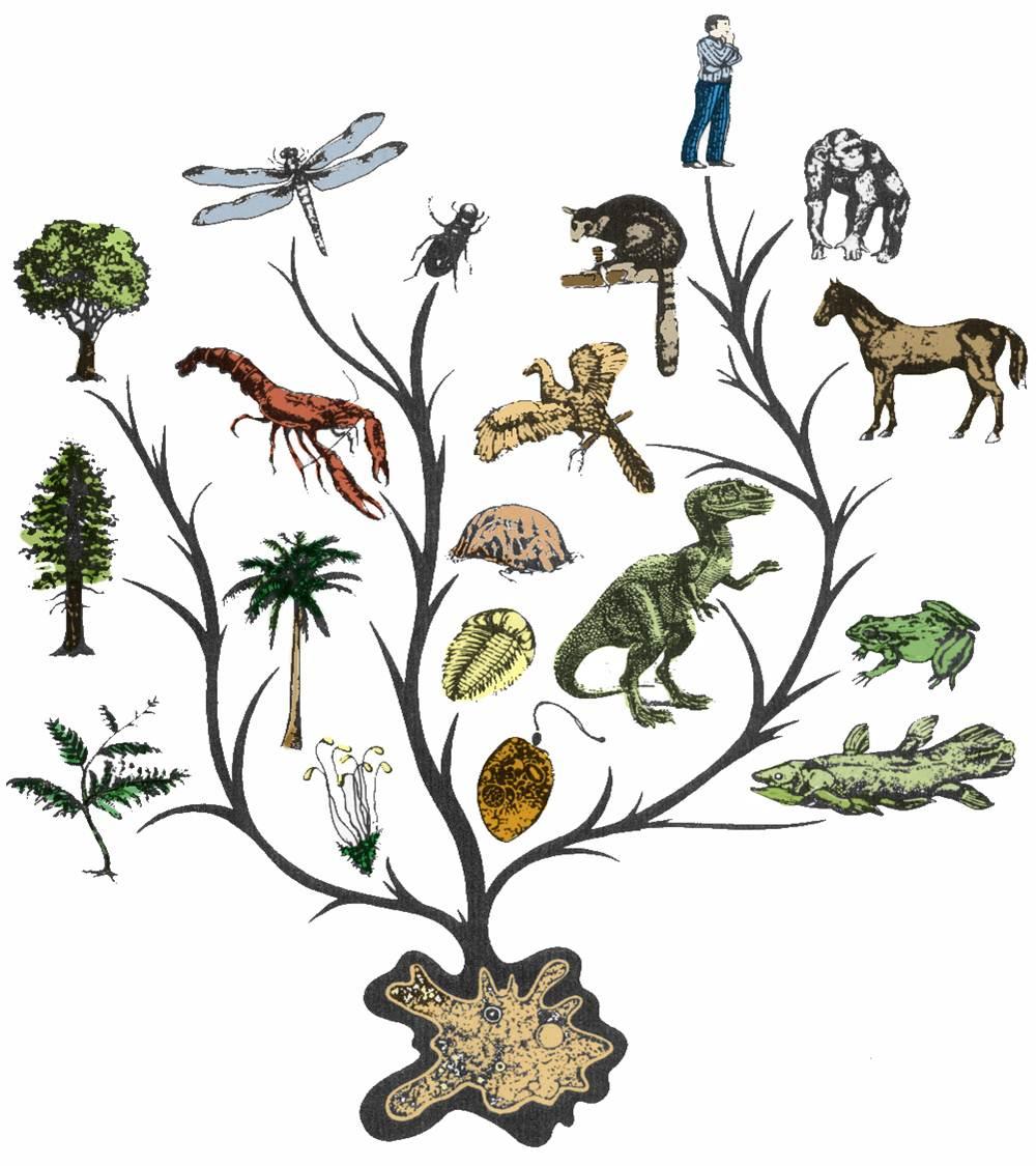 دانلود تحقیق تکامل موجودات زنده