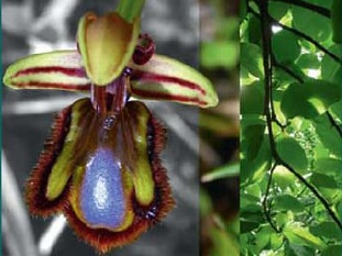 کتاب روابط گیاهان با محیط پیرامونشان