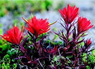 کتاب بررسی فیزیولوژی در گیاهان گل دار (نهان دانگان)