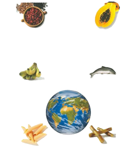 دانلود راهنمای آشپزی غذاهای تمام کشورهای دنیا