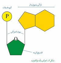 امتحان و نمونه سوال زیست شناسی دوازدهم- فصل 1- گفتار 1