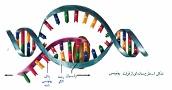آزمون و نمونه سوال زیست شناسی دوازدهم- فصل 1- گفتار 2