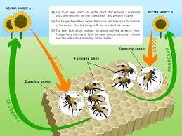 الگوریتم کلونی زنبور عسل (ABC)