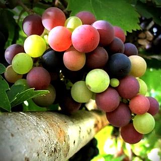 مقاله اطعمه و اشربه معمول و مرسوم مردم در عصر عباسيان