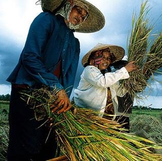 مقاله اقتصاد روستایی