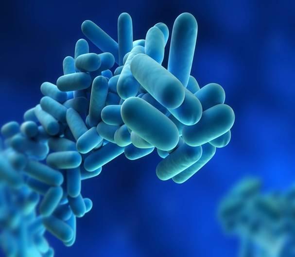 مقاله باکتری