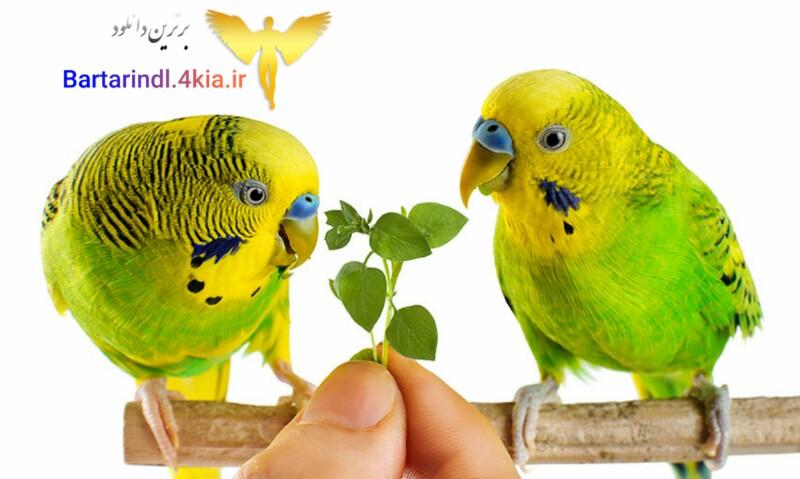 دانلود کتاب هنر سخنگو کردن مرغ عشق
