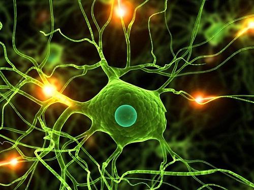 مقاله کاربرد ریاضی در علم زیست شناسی