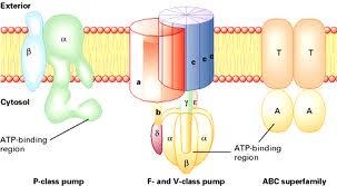 اکولوژی و اپیدرمی ویروسهای گیاهی