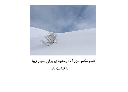 تابلو عکس تکی بزرگ زیبا ، درختچه ی برفی