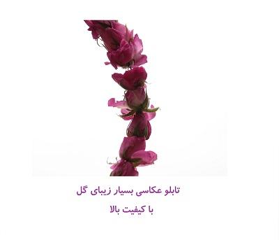 تابلو عکس تکی بزرگ زیبا ، گل