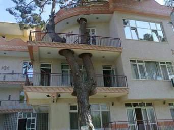 تأثیرات ساخت و ساز در محیط زیست