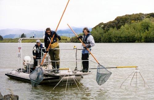 پژوهش بررسی رفتار ماهی کپور معمولی (Cyprinus carpio) در شرایط آزمایشگاهی به میدانهای متفاوت الکتریکی ایجادشده در مقابل تله ماهیگیری