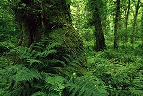 پروژه و تحقیق بررسی جنگل های هیرکانی