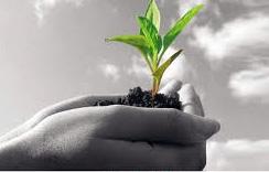 طرز تهیه خاک مناسب، کود حاصلخیز و کمپوست از زباله خانگی در خانه