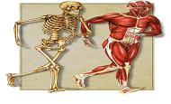 دانلود جزوه ی آناتومی بدن انسان از مباحث رشته ی تربیت بدنی pdf