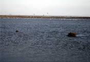 شبیه سازی رواناب با استفاده از مدل HSPF مطالعه موردی حوضه آبریز رودخانه ابرو